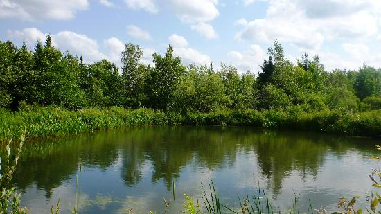 Aux Berges de l'Aurore: The pond on the property