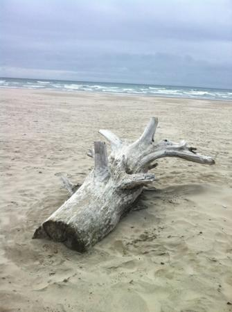 Cannon Beach Or Driftwood On The