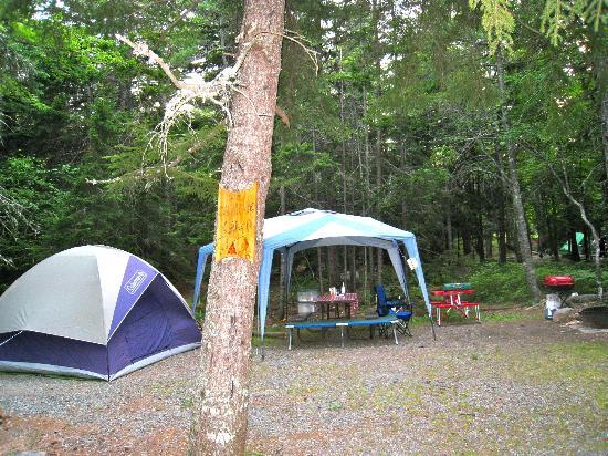 Blackwoods Campground : Campsite