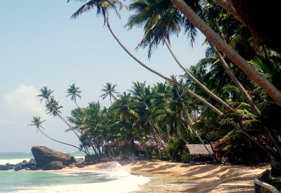 Lazy Lizard Hotel: Sri Lanka - we may take you to places where nobody will disturb you