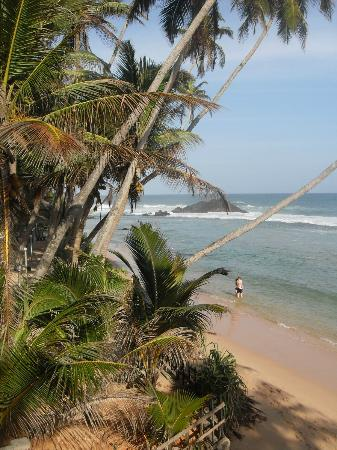 Lazy Lizard Hotel: Sri Lanka - we may show you new places undiscovered