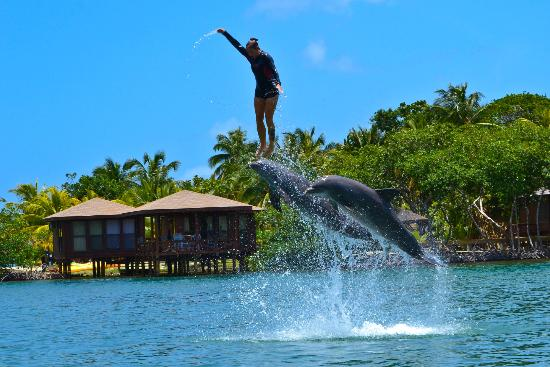 Anthony's Key Resort: Trainer Christine in the free dolphin show