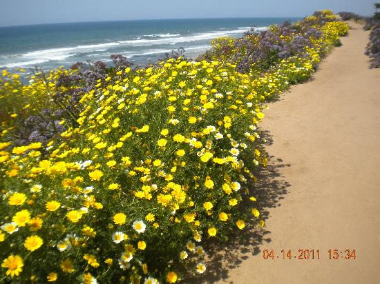 Del Mar City Beach: beautiful flowers in bloom year round