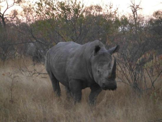 Mohlabetsi Safari Lodge: Rhino