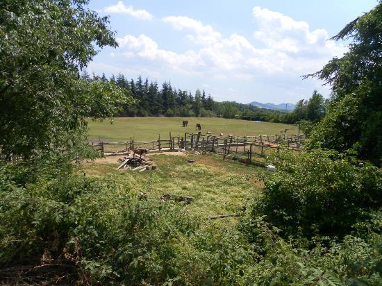 Dulcamara : La fattoria