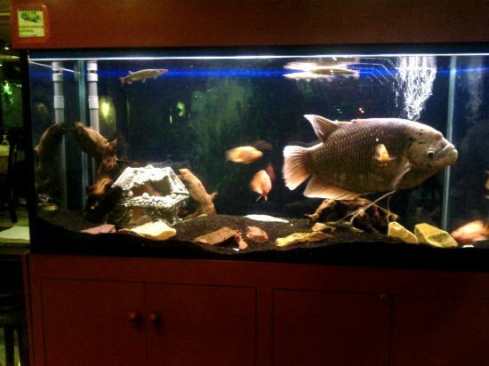 Nouveau Village Tao-Tao : bel aquarium