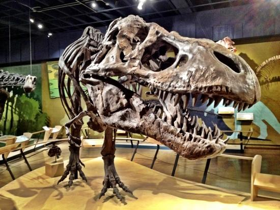The abc 39 s of cleveland oh Dinosaur museum ohio
