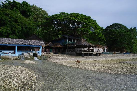 Tuburan, Filippinene: The house with a tree through it !