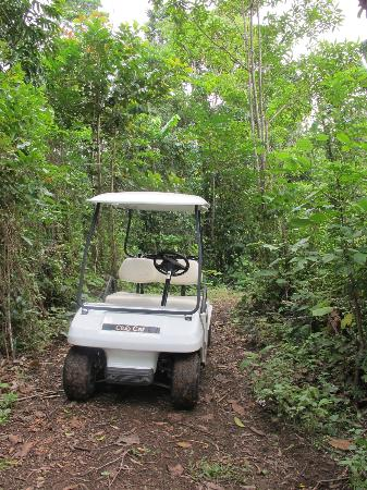 Misty Mountains Tropical Rainforest Retreat: Our golf buggy - it came on lots of travels with us!