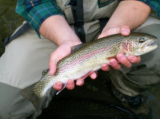 Just Fly Fish LLC: One of many Rainbows caught
