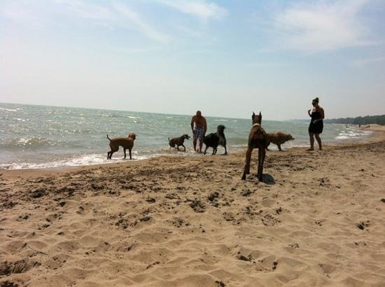 Port Rowan, Канада: Dog Beach