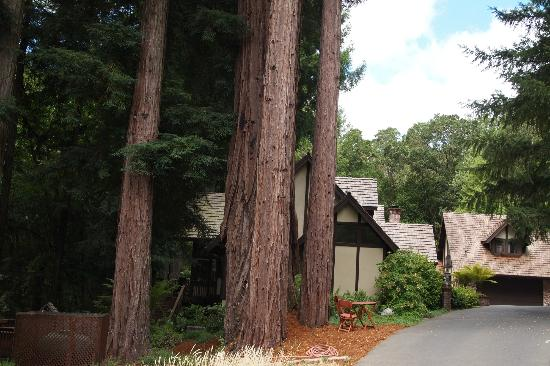 Avalon, a Luxury Bed & Breakfast: Yes, real redwoods provide the shade....