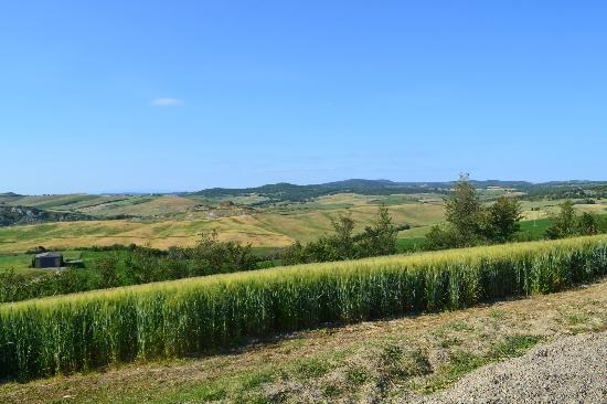 Agriturismo Bonello: Green!