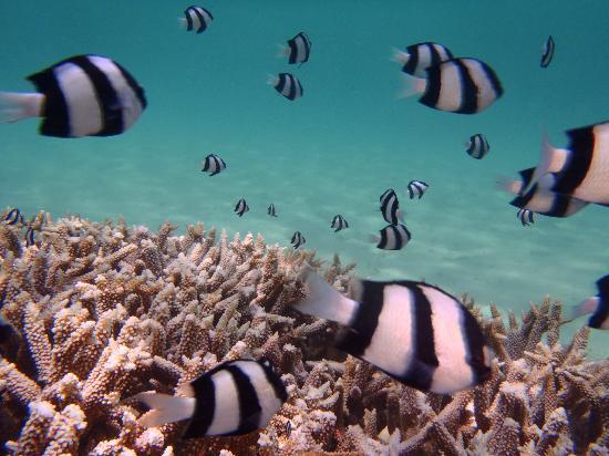 Tumon, Ilhas Marianas: イパオの体験ダイビングの時の写真です