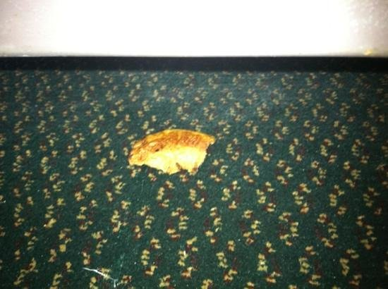Howard Johnson Inn Cape Cod Area: bagel on floor