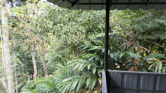 Wayanad Neverland Homestay: view from our room