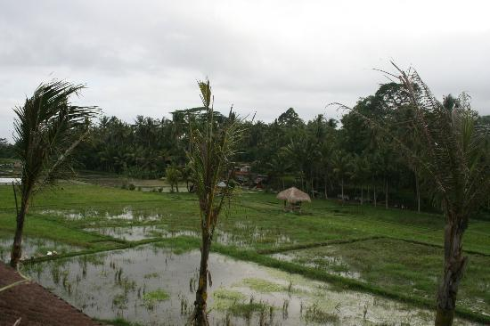 Kenanga Boutique Hotel: Rice Fields-View from room