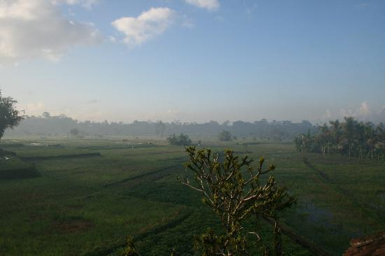 Mathis Retreat: Rice Fields-View from room
