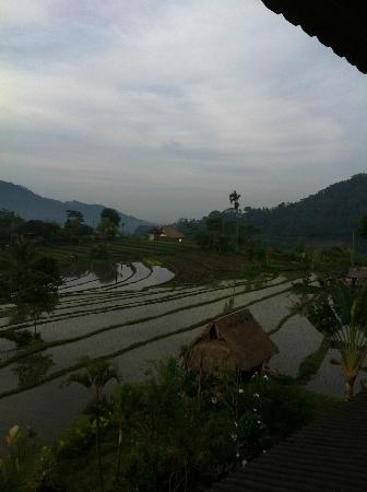Sawah Indah Villa: View from suite, rice fields