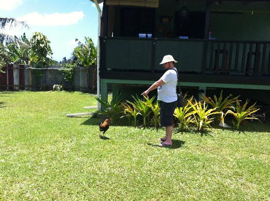 Ariana Bungalows: A rooster, named Baby Girl.