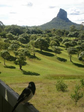 Glass house mountains lookout pictures