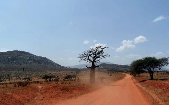 Tsavo National Park East, كينيا: PIsta e Baobab 