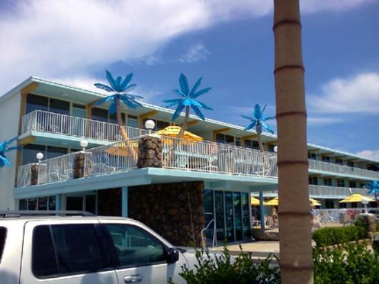 Blue Palms!