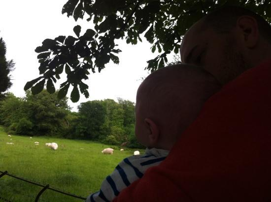 Bron Eifion Country House Hotel: My boys exploring