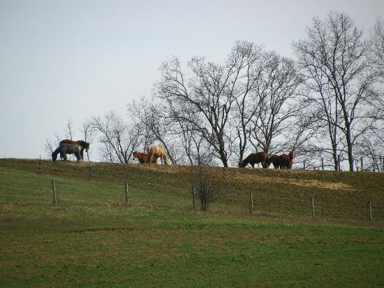 Guggisberg Swiss Inn: We went off-season, so we couldn't see the horses up close.
