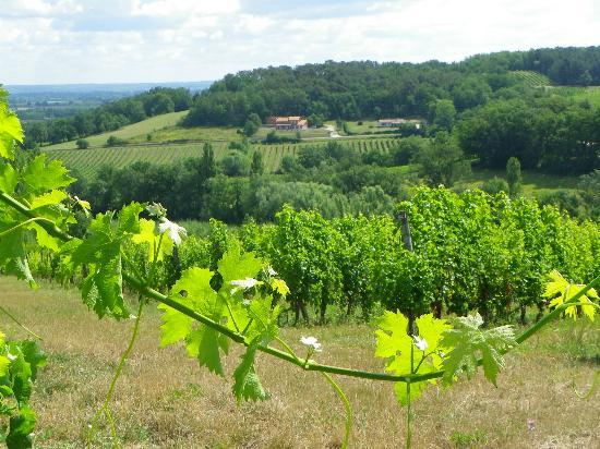 Château Feely: a view of one of the vineyards 
