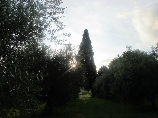 Pieve di Caminino Historic Farm: The Grounds