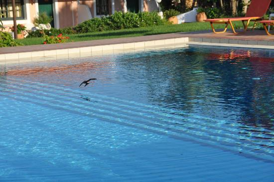 Androulakis Apartments: Swallows dipping in ther pool early evening!!!!