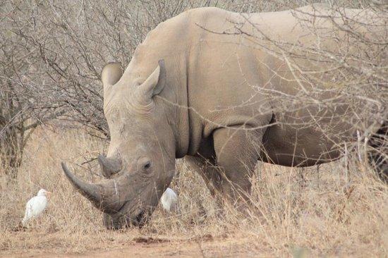 شيشانجيني برايفات لودج: Rhino 
