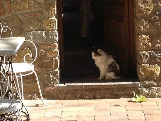 Agriturismo Casanova - La Ripintura: One of the resident kitties