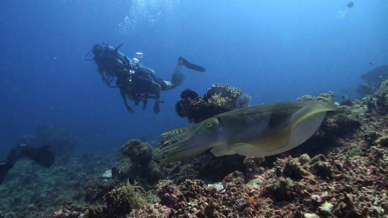 Blue Marlin Dive Gili Trawangan: Too cool! Giliair Wall