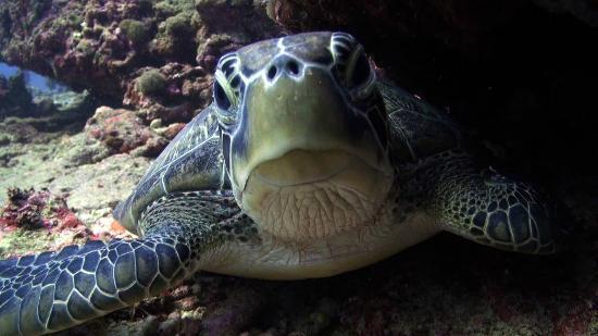 Blue Marlin Dive Gili Trawangan: Sea Turtles