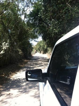 Hotelito Desconocido: the road to hotelito