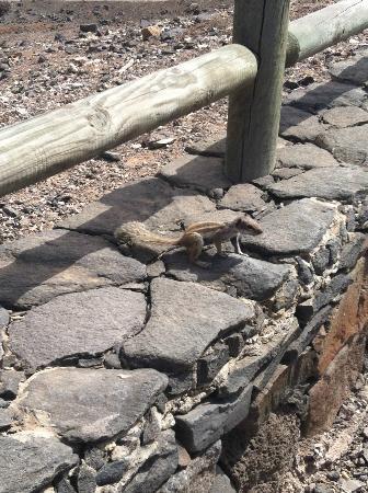 Playa de Cofete: cofete scoiattolo