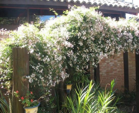 Hotel Pousada Shangri-La: jasmim poeta c/ florada