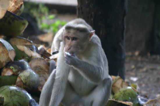 Thrissur, India: Local Resident