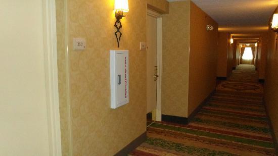 Hilton Garden Inn Chicago / Oakbrook Terrace: Hallway.