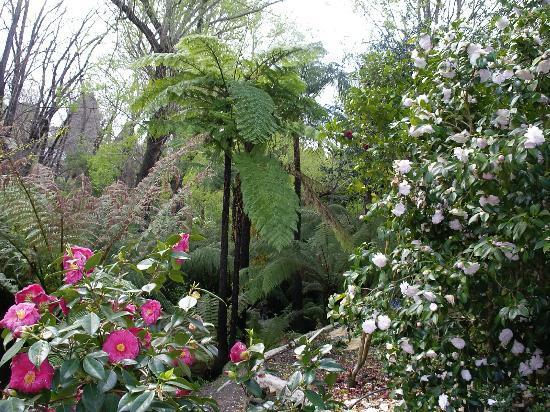 Adelaide Hills Bed and Breakfast Accommodation: Garden walk