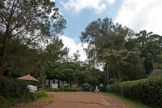 Nairobi Arboretum: Trees of the National Arboretum