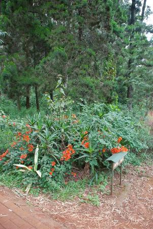 Nairobi Arboretum: Colourful plants in the Arboretum