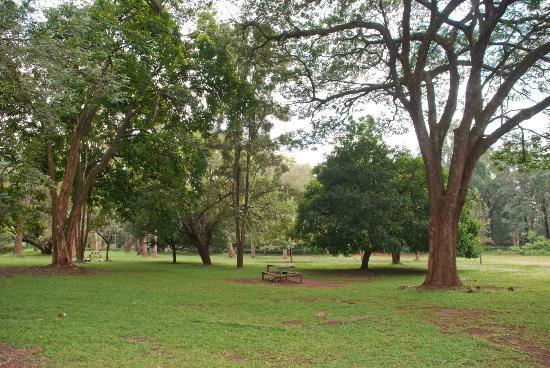 Nairobi Arboretum: Open spaces in the park