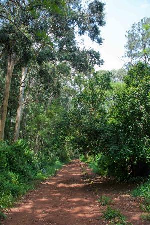 Nairobi Arboretum: Walking in the Arboretum