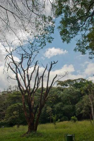 Nairobi Arboretum: A nice Nairobi afternoon