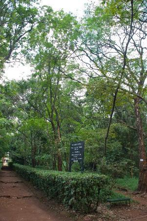 Nairobi Arboretum: Signs on Kenyan trees