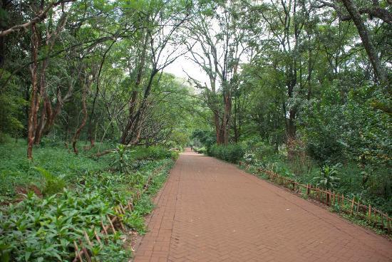 Nairobi Arboretum: Nairobi's National Arboretum