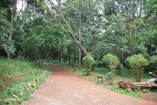 Nairobi Arboretum: Pathway in Nairobi